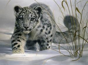 l19f_snow_leopard_cub
